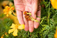 15 Conseils de jardinage Août