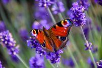 15 conseils de jardinage juillet