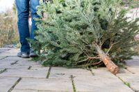 5 conseils de jardinage hivernal pour la maison et le jardin