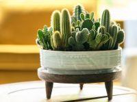 À chaque mois sa plante, août 2020 : le Cactus