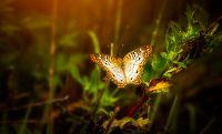 Compter les papillons et jardiner en harmonie avec les papillons