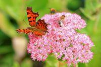 Le jour de l'Ascension : plantes de jardin avec une symbolique divine
