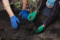 Mois de la rose d'octobre : plantation, taille et protection