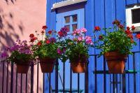 Saints de Glace : soigner les plantes en pots et en bacs